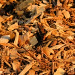 Biomass Woodchips